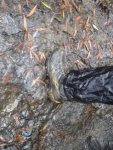 Overland Track March 2015 131_360x480.jpg